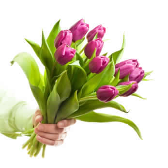 tulips, happy, cheerful flowers, bouquet, entertainers, vase, lumsden, regina, craven, regina beach, buena vista